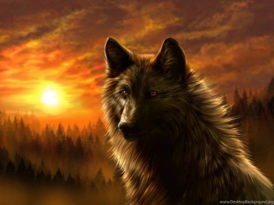Cool Animal Wallpapers Wolf Desktop Background