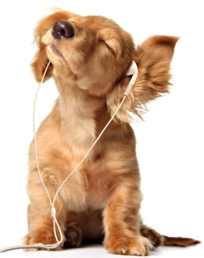 Cute Puppy Listening To Headphones HD Wallpapers For Mobile Cool ... Desktop Background