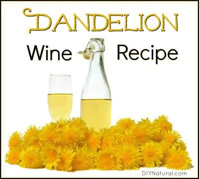 Dandelion Wine Recipe: How to Make Dandelion Wine & Vinegar at Home