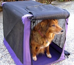 How To Crate Train Your Dog - The Dogington Post