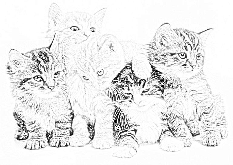 Gatto disegni da stampare e colorare for Pesciolini da colorare e stampare