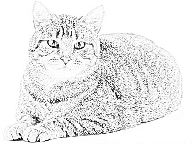 Disegni Gattini Da Colorare Migliori Pagine Da Colorare