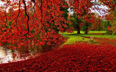 40 Autumn Scene Background Wallpaper for Desktop