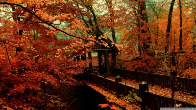 40 Autumn Scene Background Wallpaper for Desktop