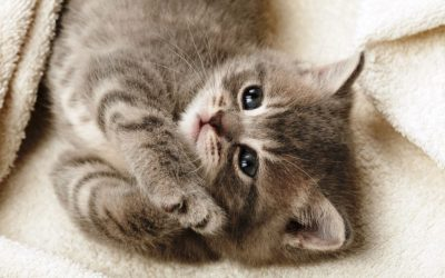 50 HD Cute Cat Wallpapers for Your Desktop