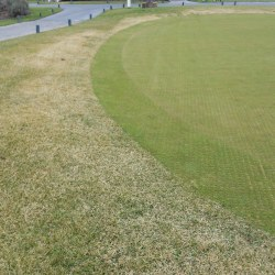 5 _Trimmit_injury_to_a_tall_fescue_green_surround_in_winter Jpg