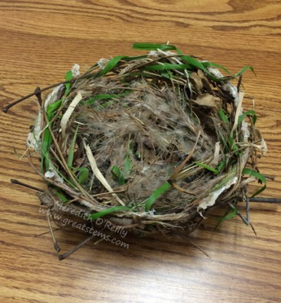How to Engineer a Bird's Nest | Great Stems