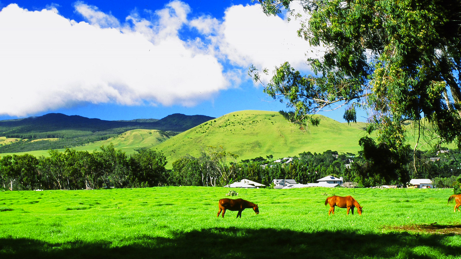 What is it Like to Live in Waimea on the Big Island    Hawaii Real     waimea2