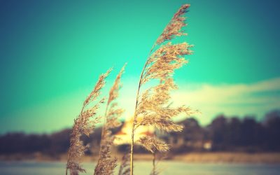 high definition tumblr wallpaper 14 – HD Wallpapers , HD Backgrounds,Tumblr Backgrounds, Images ...
