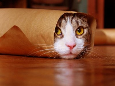 Funny Cat Wallpapers, Pictures, Images