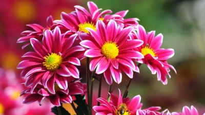 Beautiful Flowers Wallpapers, Pictures, Images