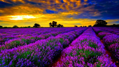 Colorful Wallpapers, Pictures, Images