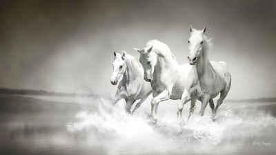 White Horse Wallpapers, Pictures, Images