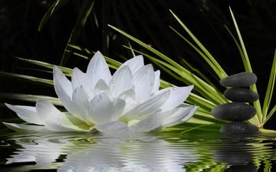 Zen Wallpapers, Pictures, Images