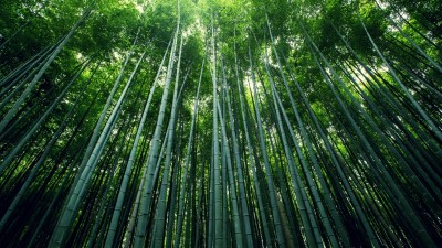 Bamboo Forest Wallpapers | HD Wallpapers | ID #15860