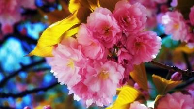 Beautiful Flowers Wallpapers | HD Wallpapers | ID #9187