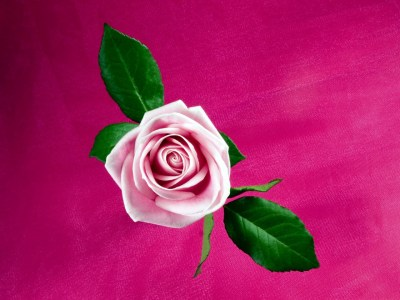 Cool Pink Rose Wallpapers | HD Wallpapers | ID #9442