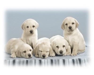 Cute Puppies Wallpapers | HD Wallpapers | ID #4993