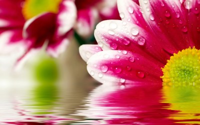 Flower Reflections Wallpapers   HD Wallpapers   ID #9868