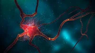 Neuron Cell Wallpapers   HD Wallpapers   ID #10629