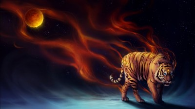 Power Tiger Wallpapers | HD Wallpapers | ID #12363