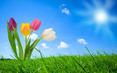 Spring Nature Wallpapers | HD Wallpapers | ID #8658