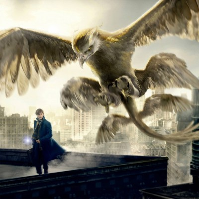 Thunderbird Fantastic Beasts and Where to Find Them Wallpapers   HD Wallpapers   ID #18916