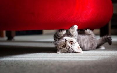 Cute Little Cat Wallpapers | HD Wallpapers | ID #11425