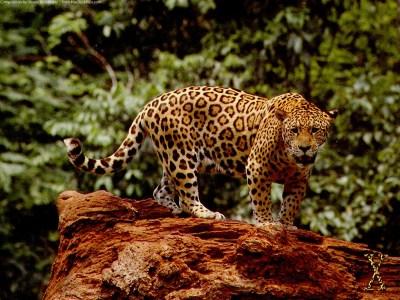 Great Jaguar Wallpapers | HD Wallpapers | ID #5043