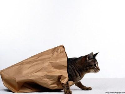 Cat in a bag wallpaper - HD Wallpapers