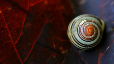 Close up snail wallpaper - HD Wallpapers