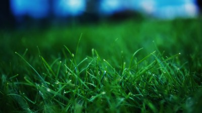 Close up grass wallpaper - HD Wallpapers