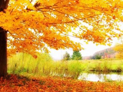 HD Autumn Scenery Wallpaper - HD Wallpapers