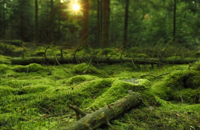 Daily Wallpaper: Mossy Forest   I Like To Waste My Time