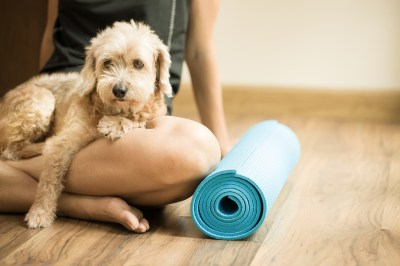 Let's Get Physical! 'Doga' And Other Pet-Friendly Exercise ...