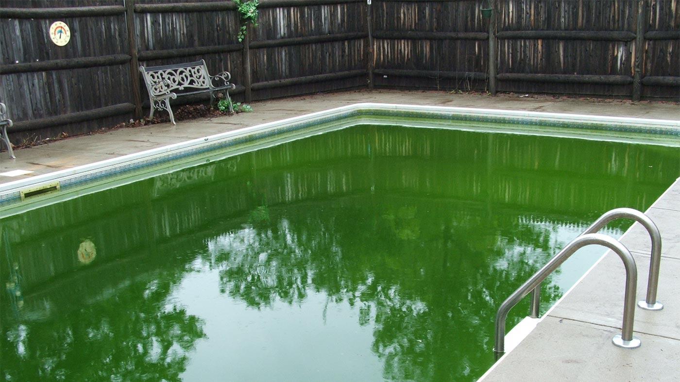 Por que a Água da Piscina Fica Verde, Como Limpar Piscina com Água Verde