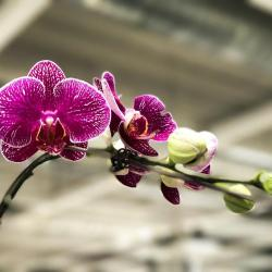 Free Photo Asia Meadow Colorful Flower Orchid Flowering Max Pixel
