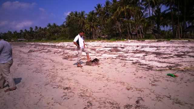 Limbah minyak di bibir pantai Desa Pengudang
