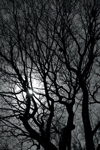 Download Dark Night Trees iPhone Wallpaper - Mobile Wallpapers - Mobile Fun