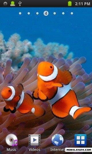 Clown Fish Live Wallpaper