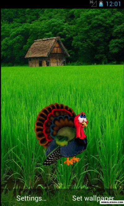 Turkey Live Wallpaper Free Samsung Galaxy Ace 2 App ...