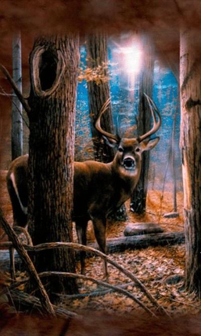 Beautiful Deer Live Wallpaper Free Android Live Wallpaper download - Download the Free Beautiful ...