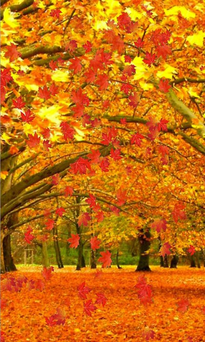 Fall live wallpaper and Daydream Free Android Live Wallpaper download - Download the Free Fall ...