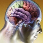 Alimentos para el Cerebro y la Memoria
