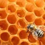 APITOXINA: un veneno natural que cura