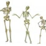 Nuestros Huesos: Como son y Como cuidarlos