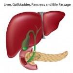 El Hígado, un órgano crucial para la Pérdida de Peso