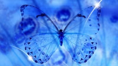 Blue Butterfly Wallpaper HD   PixelsTalk.Net