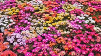 Colorful Flowers Wallpapers HD | PixelsTalk.Net