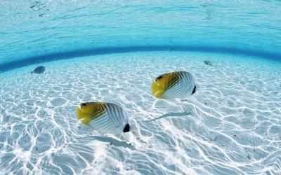 Ocean Fish Wallpaper HD | PixelsTalk.Net
